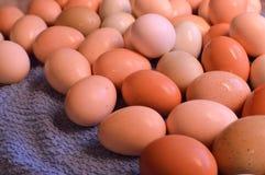 Brown yard eggs, wet Stock Image
