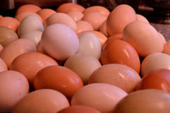 Brown yard eggs, wet Royalty Free Stock Photos