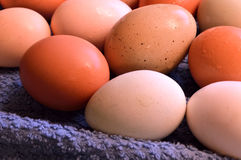Brown yard eggs, wet Royalty Free Stock Images