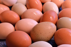 Brown yard eggs, wet Royalty Free Stock Photo