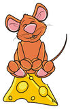 Brown yasidit mouse on a piece of cheese Royalty Free Stock Image