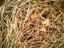 Brown and yellow autumn background. With fallen leaves and old dry grass Royalty Free Stock Photography