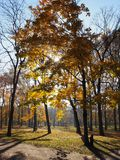 Brown yellow autumn leaves on the park trees. In Nepliget Budapest royalty free stock image