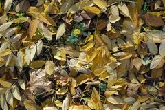 Brown, yellow, beige fallen leaves. From above royalty free stock images