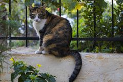 Brown and yellow cat perched on the garden fence. Royalty Free Stock Image
