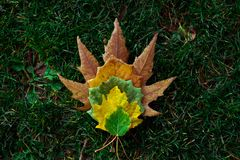 Brown, Yellow, And Green Leaves On Green Grass Royalty Free Stock Photography