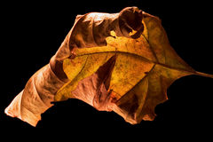 Brown yellow in a leaf Stock Photography