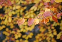 Brown and Yellow Leaves on Focus Photo Stock Photo