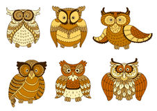 Brown and yellow spotted forest owl birds Stock Image