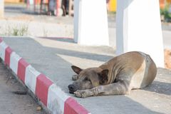 Brown dog sleep on the foot bath. Brown young dog sleep alone on the foot bath Royalty Free Stock Photography