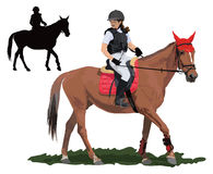 Brown young horse and lady. Brown race horse and lady jockey in uniform. Detailed color vector illustration Royalty Free Stock Photo