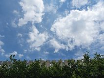 Brown-Zaun With Green Leaves und blauer Himmel-Hintergrund Lizenzfreies Stockfoto