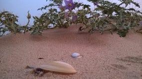 Browne piaski z kwiatami i kamieniami Zdjęcia Stock