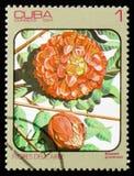 Brownea grandiceps, serie av bilder Arkivbilder