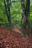 BrownFoliage Στοκ εικόνες με δικαίωμα ελεύθερης χρήσης