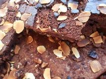 brownie imagem de stock
