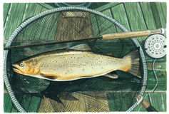 Brownie. An original watercolour painting (by myself as the artist) of a Brownie - a fresh water trout Royalty Free Stock Image
