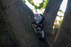 Brownie climbed a tree to help a ladybug when she fell off a twig royalty free stock photos