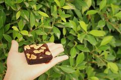Brownie in hand on a background of green leaves Stock Photo