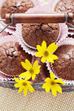 Brownie muffins Stock Photos