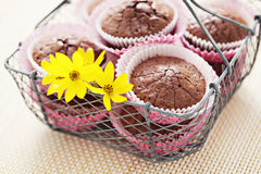 Brownie muffins Royalty Free Stock Photography