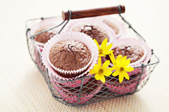 Brownie muffins Royalty Free Stock Photos