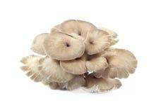 Brownies mushroom. Stock Photos