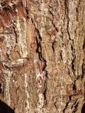 Brownish bark. Tree bark texture close up Stock Photos