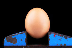 Brownish egg in a vice royalty free stock photo