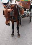 Brownpferd und -wagen Lizenzfreie Stockbilder