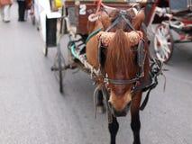 Brownpferd und -wagen Stockfoto