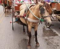 Brownpferd und -wagen Lizenzfreies Stockbild