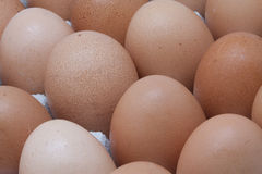 Browns eggs Royalty Free Stock Photos