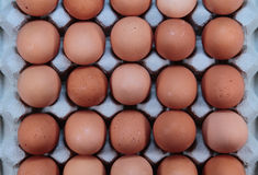 Browns eggs Stock Photos
