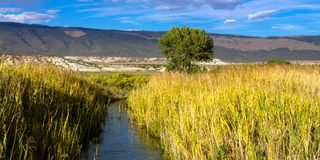 A creek flows through wetland plants and mountains in Browns Park NWR in Colorado royalty free stock images