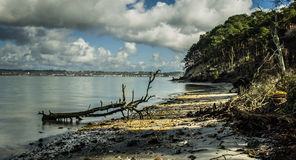 Brownsea Island Stock Photography