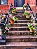 Brownstone steps and plants Stock Image