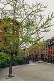 Brownstone townhouse residential street in Brooklyn Heights Royalty Free Stock Photos