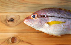 Brownstripe Snapper seafood fish Royalty Free Stock Image