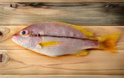 Brownstripe Snapper seafood fish Royalty Free Stock Photo