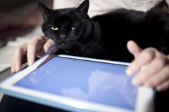 Browsing on touchpad. Woman browsing on touchpad with black cat on laps Stock Photo