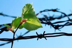 Bruch des Gefängnisses Lizenzfreie Stockfotos