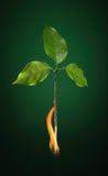 Bruci l'albero giù Fotografia Stock