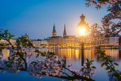 Bruci la lanterna in parco con i rami dei fiori del fiore di ciliegia sul bello municipio del fiume di Alster e di Amburgo - Rath Immagini Stock Libere da Diritti