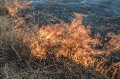 Brucia l'erba asciutta fotografie stock