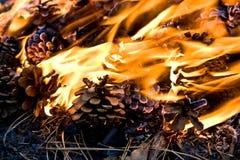 Bruciando nel legno fotografie stock libere da diritti