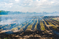 Bruciando in riso da iniziare una nuova stagione di piantatura Immagine Stock Libera da Diritti