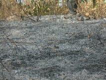 bruciato Fotografia Stock