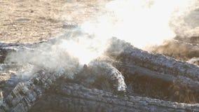 Bruciato ai carboni, gli alberi neri fumano contro fondo dei piedi della gente stock footage