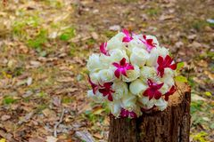 Brud- bukett av rosor på träplankor Royaltyfria Foton